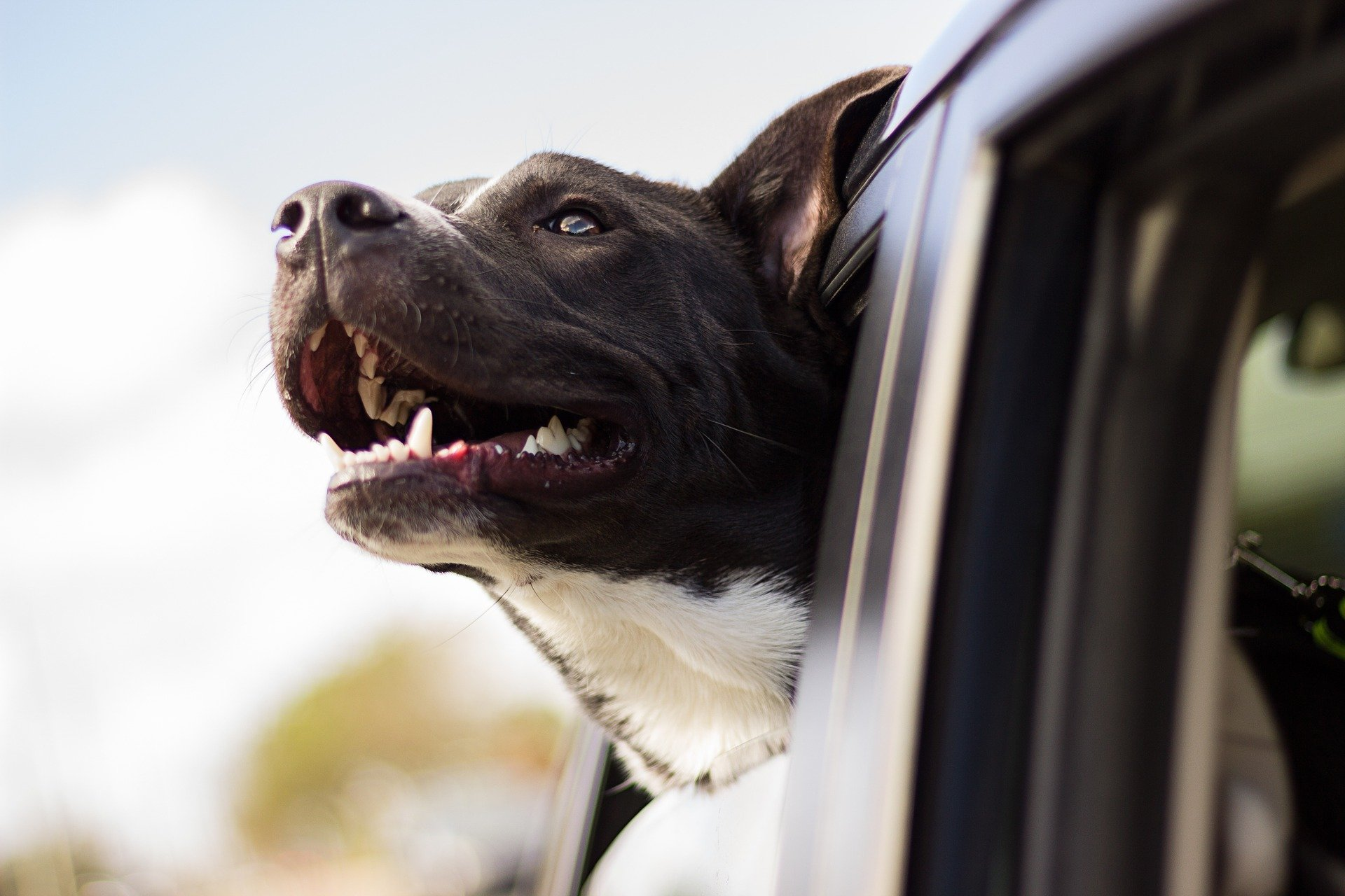 Dlaczego prowadzimy firmę transportującą zwierzęta domowe BLOG w Polsce i za granicę Szkocja Anglia UK Niemcy Holandia