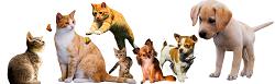 Transport zwierząt DMC