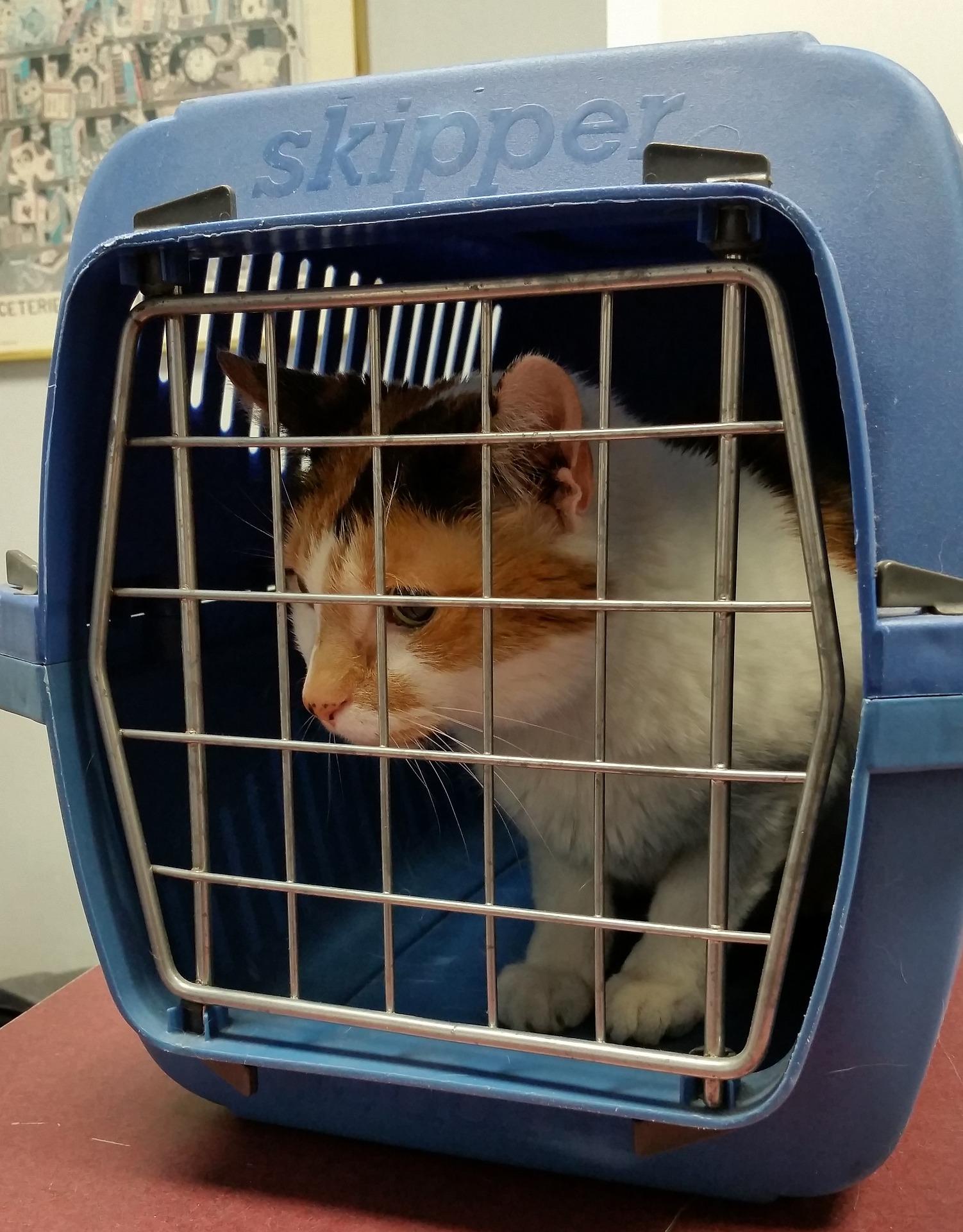 transport kotów polska anglia uk szkocja wielka brytania