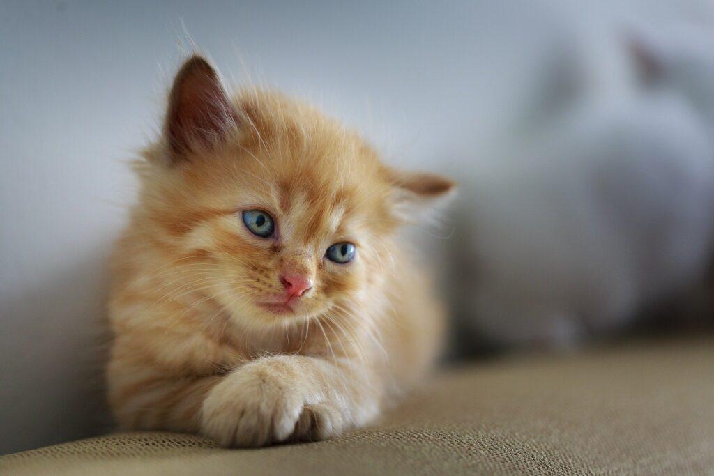 transport zwierząt domowych koty polska anglia niemcy uk szkocja